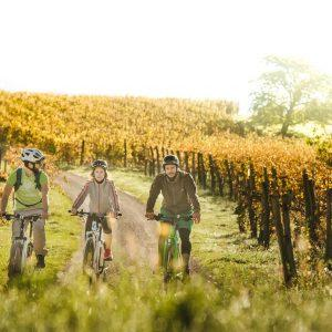 Vipava valley bike tour